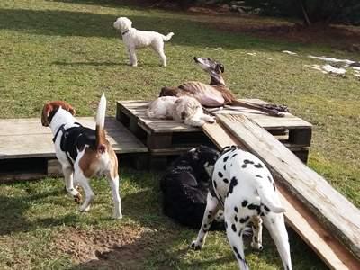 Hundegruppe bei den Paletten
