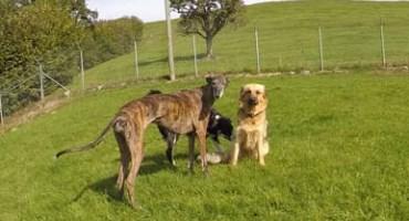 Drei Hündinnen im Auslauf der Hundepension