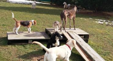 Hunde bei den Paletten